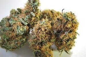 Sour Tsunami Marijuana Strain image