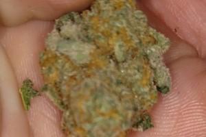 Stardawg Marijuana Strain image