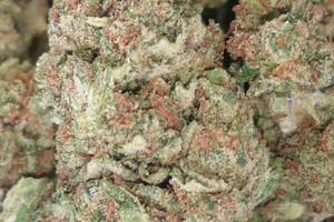 Sunset Sherbet Marijuana Strain image
