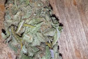 Super Kush Marijuana Strain image