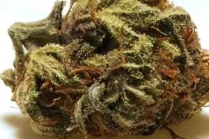 taffie Marijuana Strain image