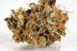Tangieland Marijuana Strain image