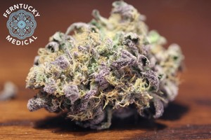Thin Mint Girl Scout Cookies Marijuana Strain image