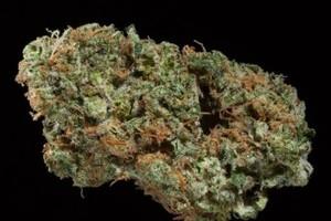 Viper Marijuana Strain image