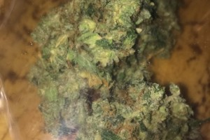 West Coast Diesel Marijuana Strain image