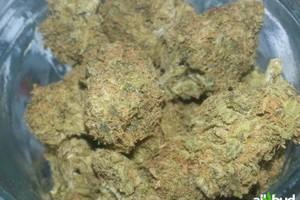 Willie Nelson Marijuana Strain image