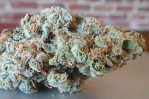 XJ-13 Marijuana Strain image