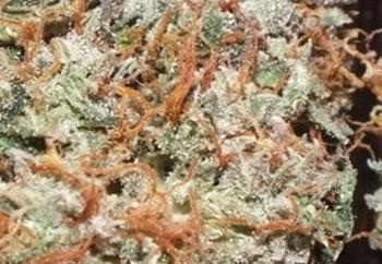 Marijuana Strains & Loss of Appetite Symptoms | AllBud