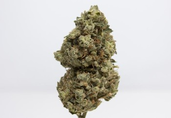 Garlic Cookies | Marijuana Strain Reviews | AllBud