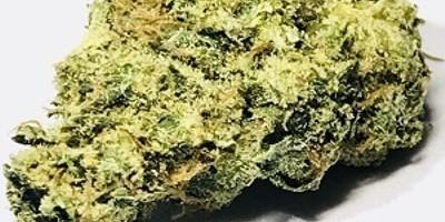 Gorilla Cookies (Platinum Grade)(27.3% TAC)