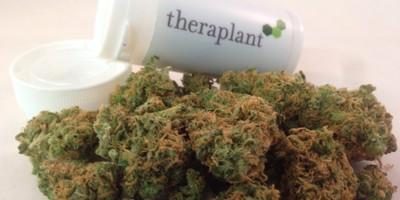 Theraplant 15033