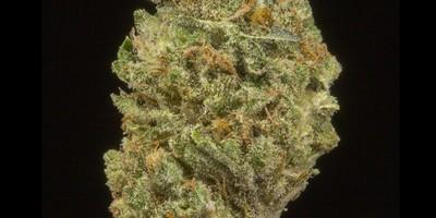Walker Kush (AU Limit: 3.5g TOTAL flower and 3 mini pre rolls / No Med Limit)