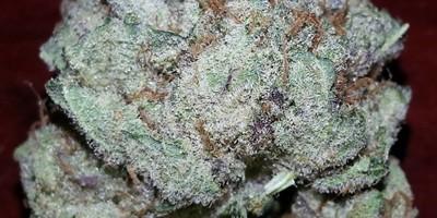 Purple NuKush