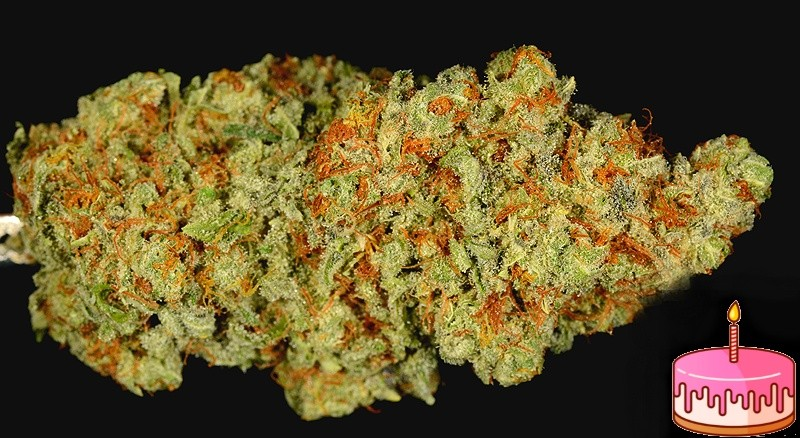 Birthday Cake Kush Marijuana Strain Reviews Allbud
