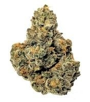 Theory Wellness Medical Marijuana Dispensary Great Barrington
